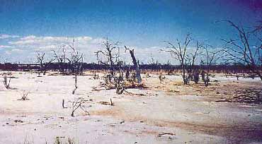 Salt-degraded land in Western Australia