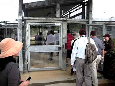 The visitors file through the entrance gates of Australia's Alcatraz Detention Centre on Christmas Island